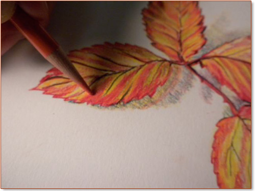 how to draw a leaves for fall